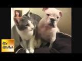 Самые смешные приколы с кошками, собаками  Смешные видео с животными 2013)    August 2013