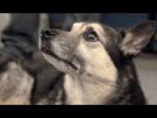 Собаки | Джуманджи. Животные в мегаполисе