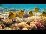 Видео релакс Подводный мир Underwater world and relaxation music