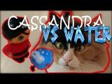 Мультфильм про кошку. Cassandra Cat спасает дом.