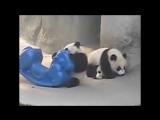 Смешные и милые панды. Кунг-фу Панда