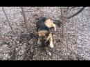 Собака - Чоп Прикол Смотреть всем! ХА - ХА