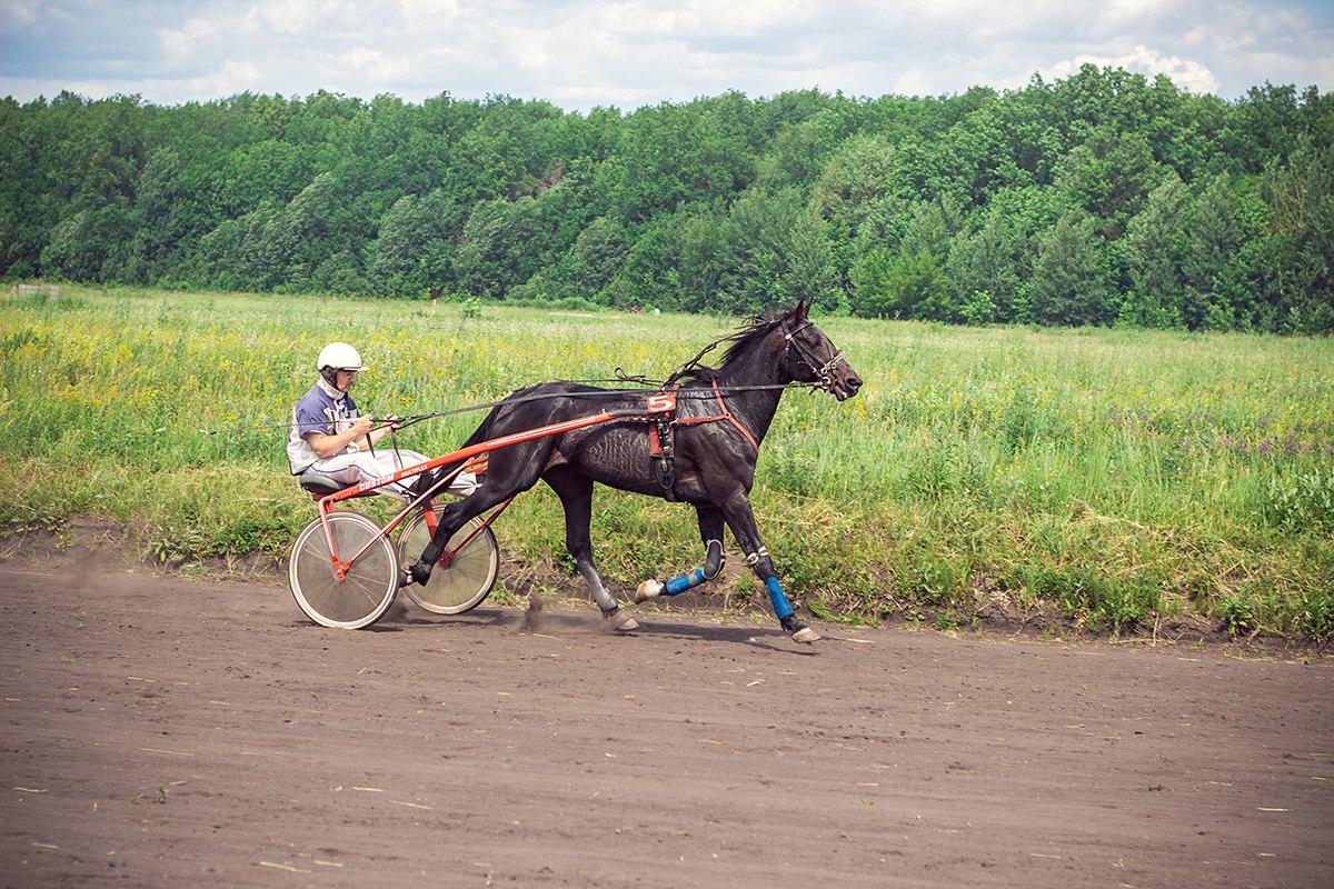 Скачки на лошадях. Сабантуй. Ульяновск