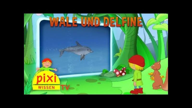 Pixi Wissen TV - Wale und Delfine