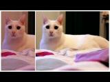 Haddaway Cat