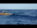 Атака целой стаи акул на рыбаков