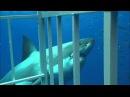 Кейптаун, ЮАР Shark Diving in Gansbaai, South