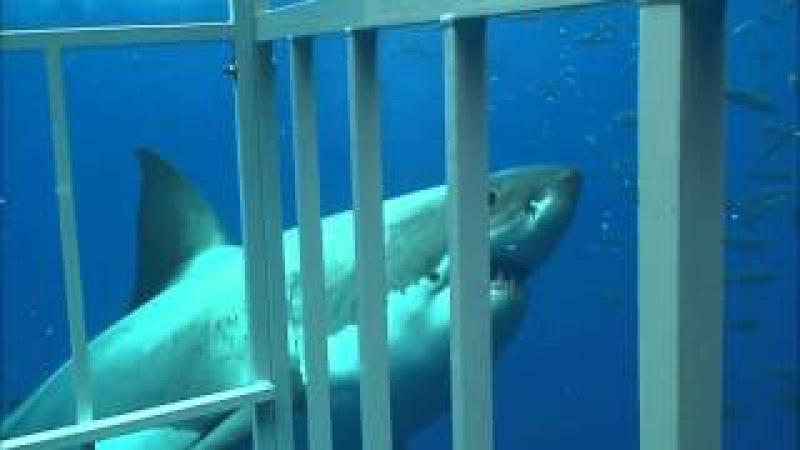 Кейптаун, ЮАР Shark Diving in Gansbaai, South Africa.wmv