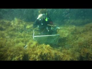 Подводная одиссея на Тархане...