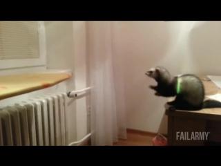 Подборка самых смешных приколов с животными