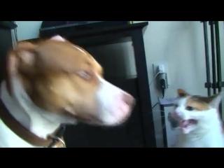 Кот против собаки