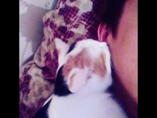 Котик сасет ушка
