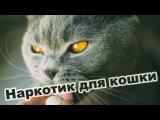 Наркотик для котика | Курт | TheShustikOFF