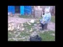 Бабулька строит гусей )) татарский прикол