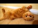 Я КОШКА КОШКА КОШКААА IM A CAT, FUNNY CAT. Смешные кошки