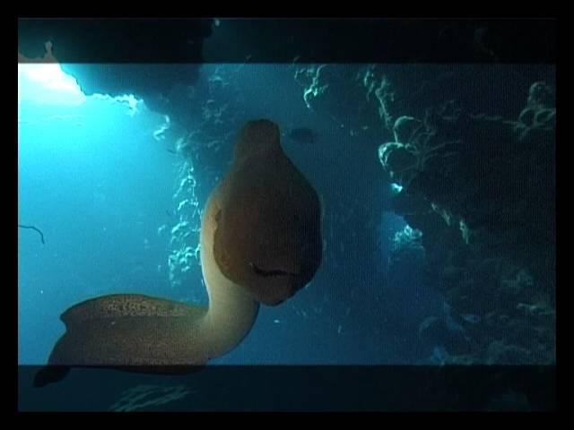 Мир подводной охоты - Красное море. Охота на мурену.