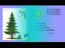 Презентация для детей. Виды деревьев для дошкольников