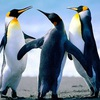 Мали пингвин