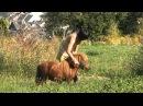 TEASER N22 Gina Rides Cavallo