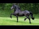Все породы лошадей. Более 210 пород лошадей