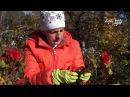 Как хранить клубни бегонии зимой Сайт Садовый мир
