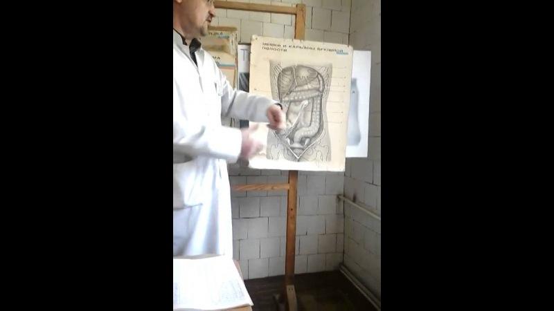Топографическая анатомия брюшной полости