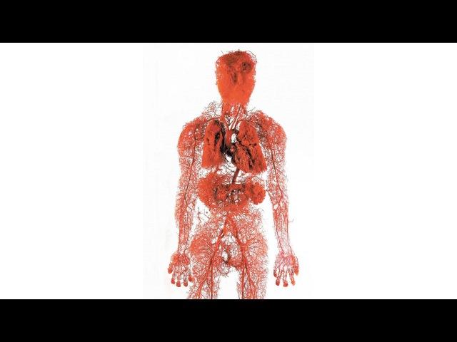13. Кровеносная система - Сосуды (8 класс) - биология, подготовка к ЕГЭ и ОГЭ