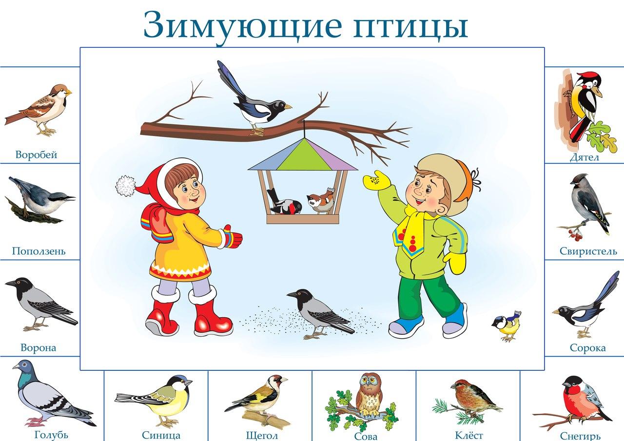 Перелетные и зимующие птицы для детей картинки