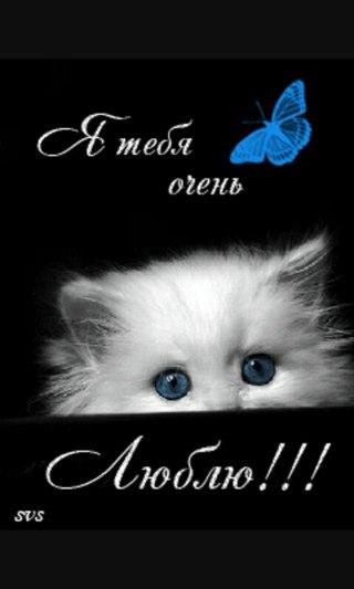 Картинки анимация котенок я тебя люблю, замка открытки