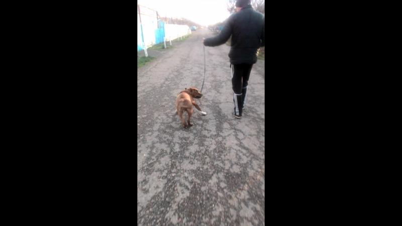 Рэйчик на прогулке -*