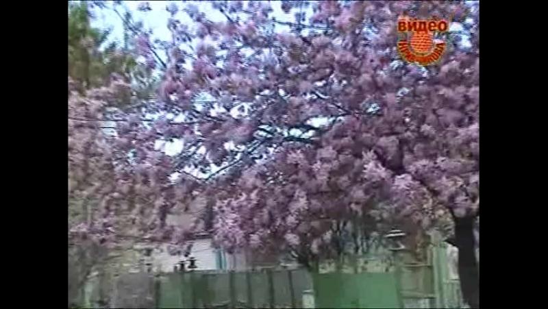 Кривчиков Медоносы