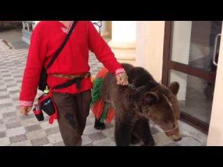 Парень спокойно гуляет со своим ручным медведем