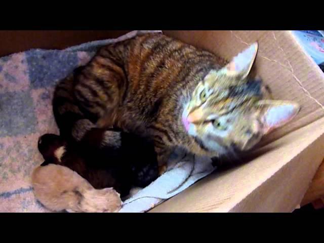 Mama Cat's Reaction to Newborn Puppy