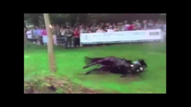 Риск Конного спорта