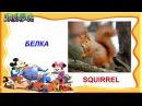 Английский язык для детей   Лесные животные