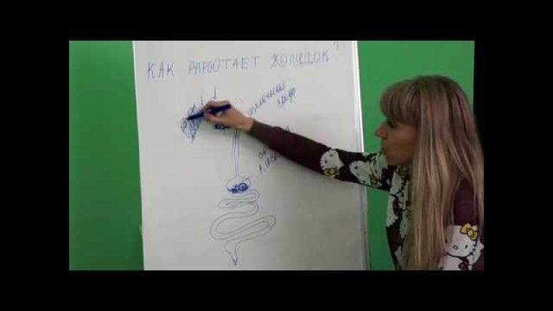 Ольга Анчина. Как работает желудок.