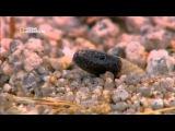 Самые опасные животные в мире (National Geographic)