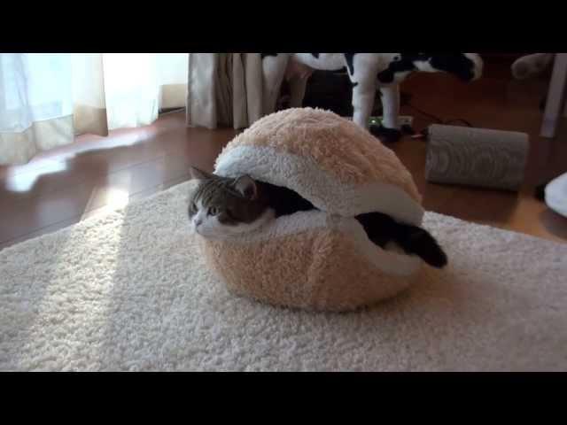 マカロンなベッドとねこ。-Macaron bed and MaruHana.-