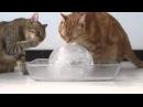 Коты и ледяной шар.Cats and ice ball