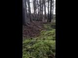 Лес дышит полной грудью