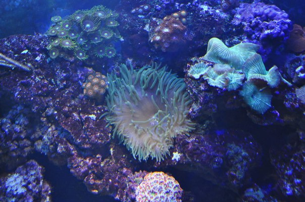 """Полное """"Погружение"""" - полтонны рифа. JO4gLeP_pNs"""