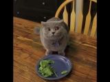 Кот ест салат