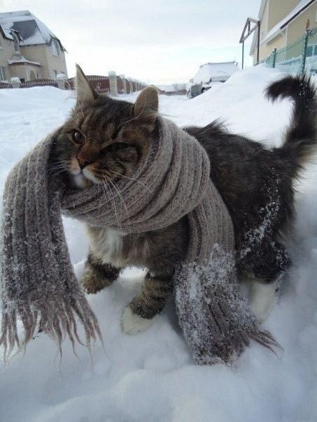 Самая теплая одежда для сердца – это доброта. Доброты вам, друзья ;)