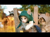 Assassins Kittens!