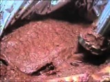 Перекачка концентрированной томатной пасты 30 Brix поршневым насосом