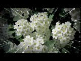 Валерий Агафонов - Снился мне сад