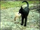 Закадычные друзья: сова и кошка
