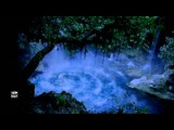 Stive Morgan - Bindweed above the water
