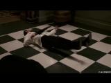 Напряги Извилины (2008) [480p]