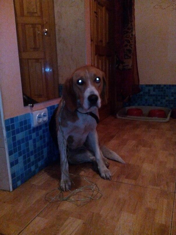 Стала раком штоб пес засадил фото 545-279